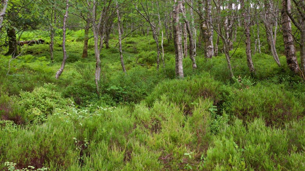 Loch Katrine featuring forests