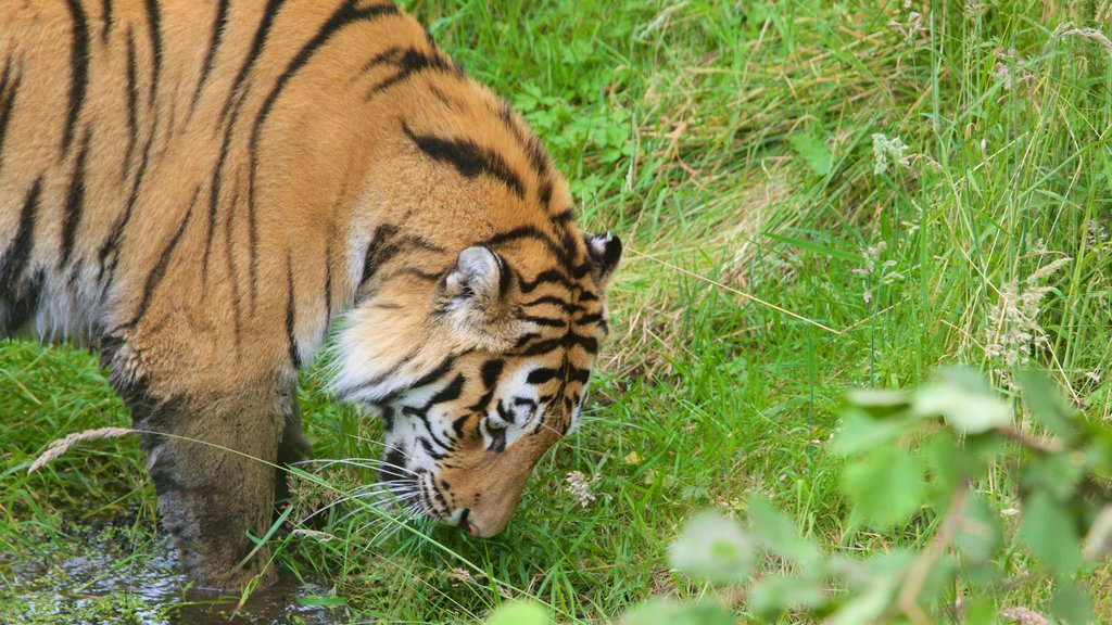 Highland Wildlife Park which includes zoo animals and dangerous animals