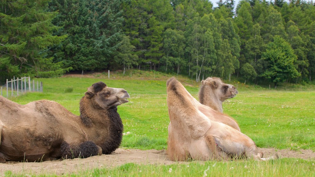 Highland Wildlife Park which includes land animals and zoo animals