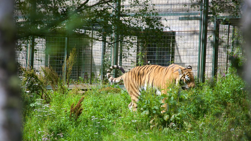 Highland Wildlife Park showing dangerous animals and zoo animals
