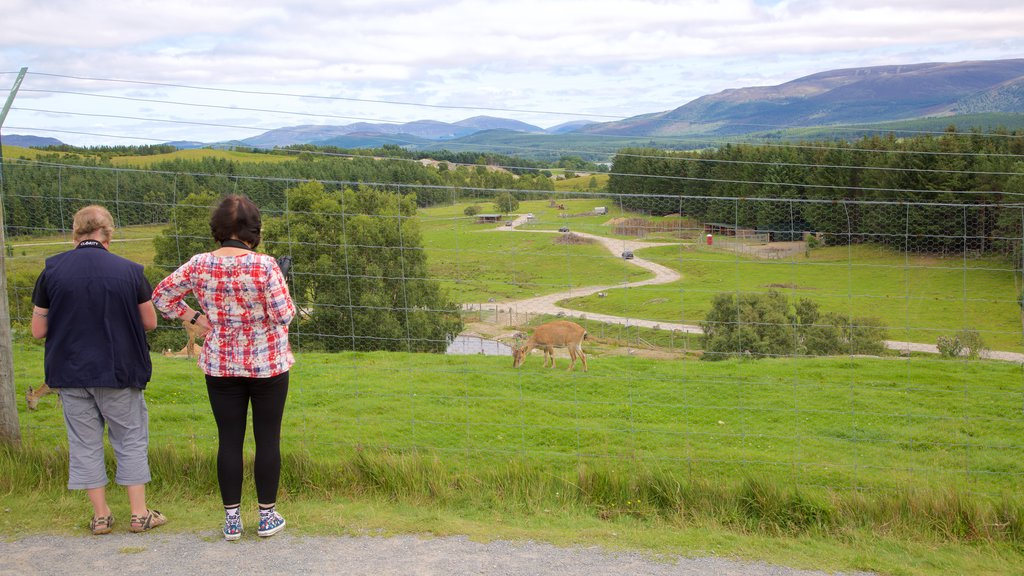 Highland Wildlife Park featuring zoo animals, animals and cuddly or friendly animals