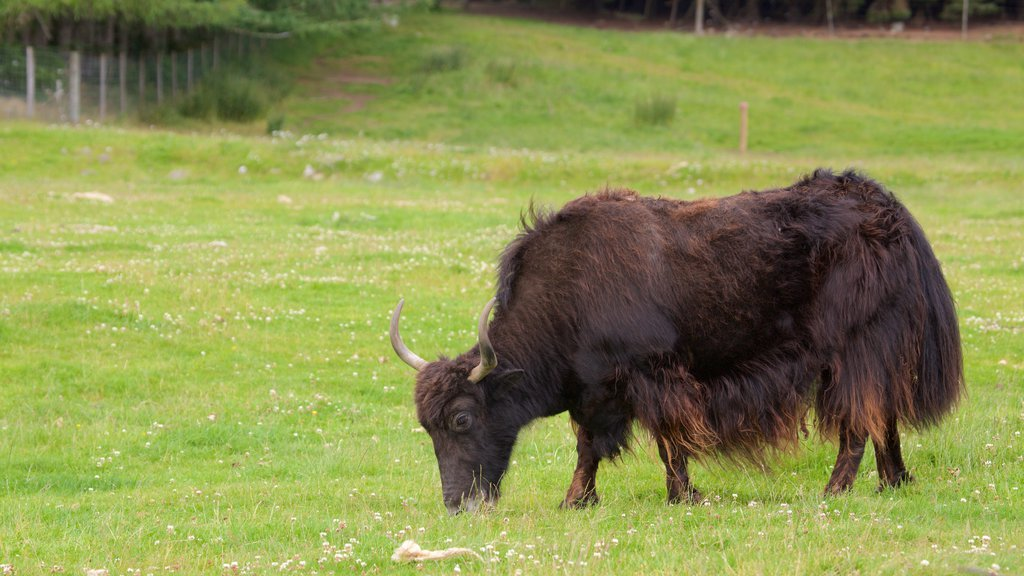 Highland Wildlife Park showing zoo animals and land animals