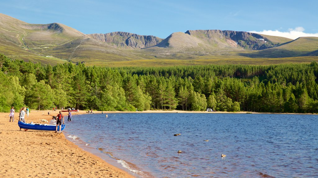 Loch Morlich featuring forest scenes, a lake or waterhole and a bay or harbor