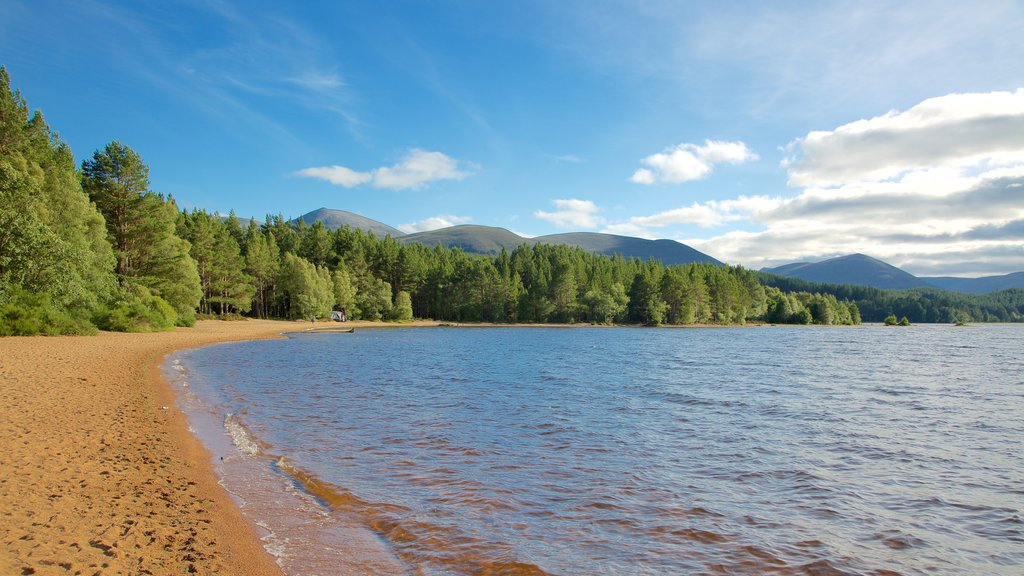 Loch Morlich showing a bay or harbor and a sandy beach