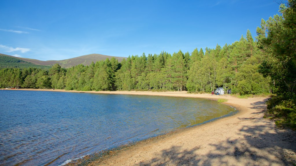 Loch Morlich which includes forests and a bay or harbor