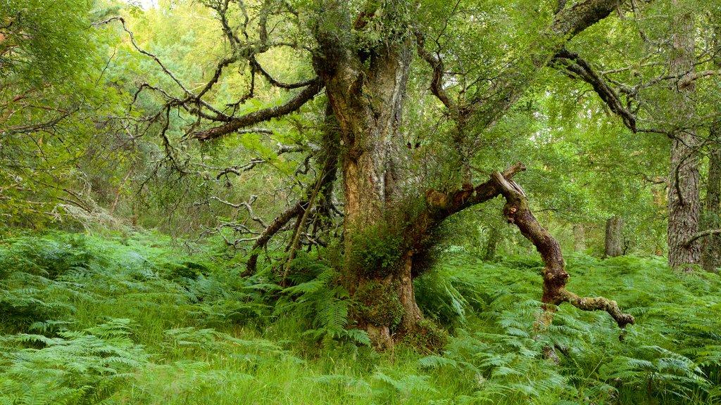 Loch Morlich featuring forest scenes