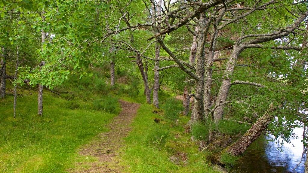 Loch an Eilein which includes forest scenes