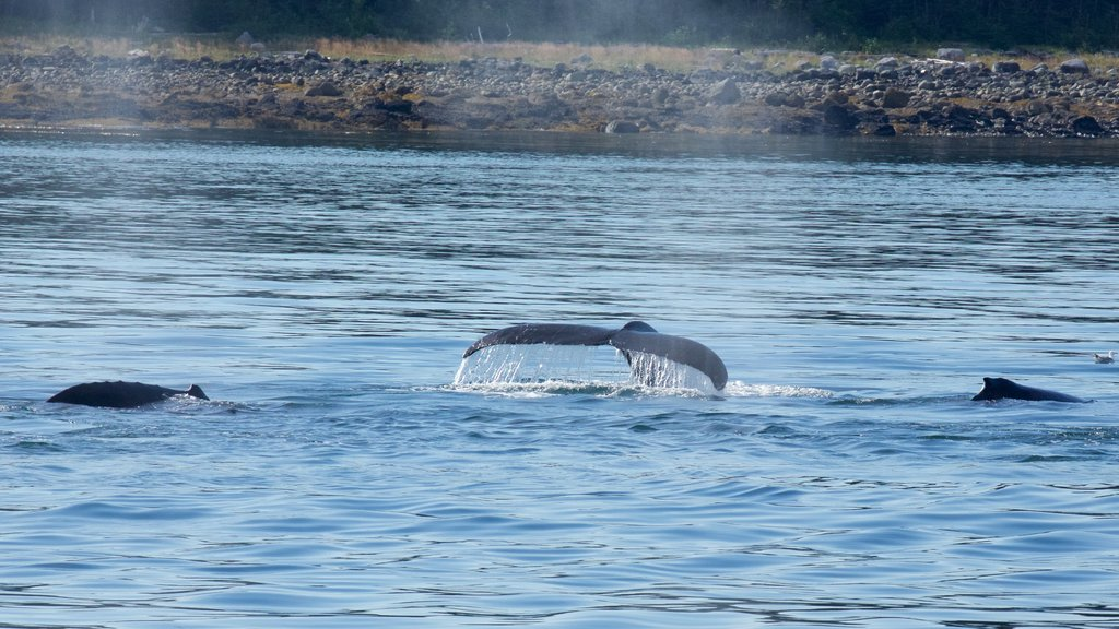 Southeast Alaska - Inside Passage featuring general coastal views and marine life