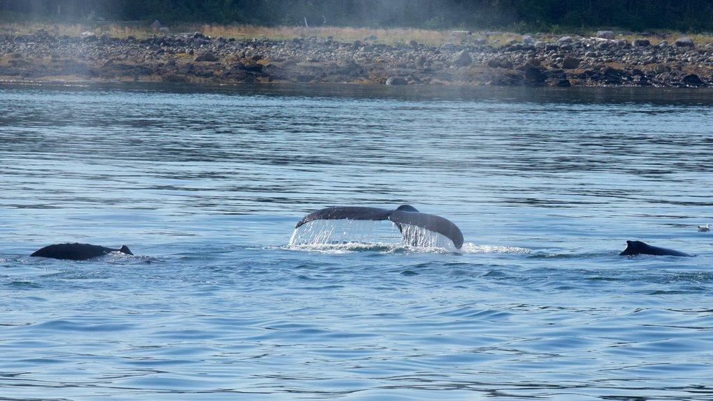 Alaska  - Inside Passage mostrando vistas generales de la costa y vida marina