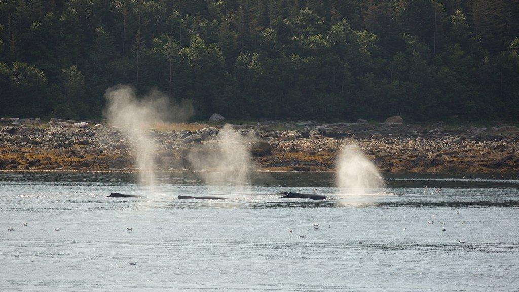 Juneau featuring marine life and general coastal views