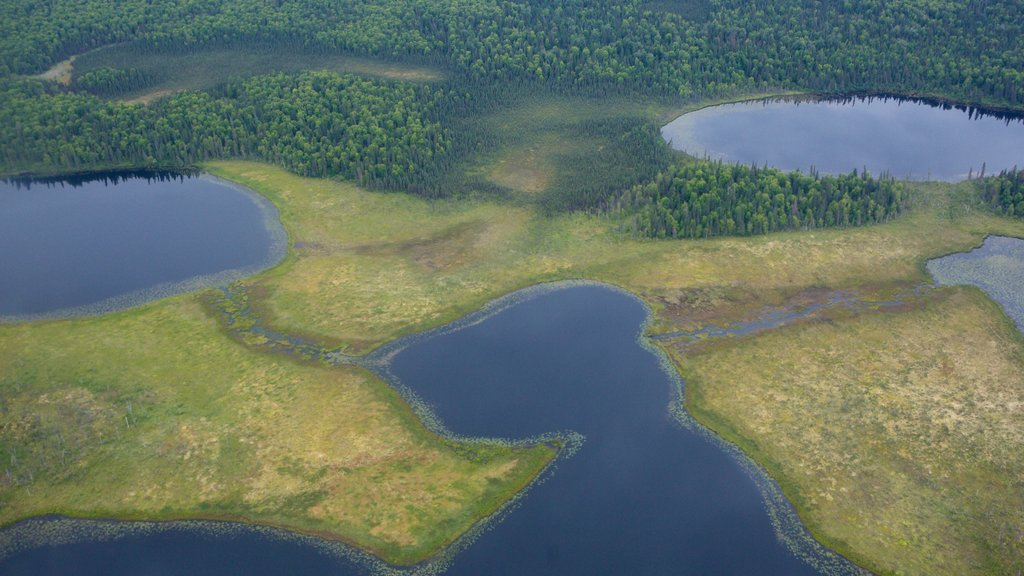 Anchorage showing a lake or waterhole and forest scenes