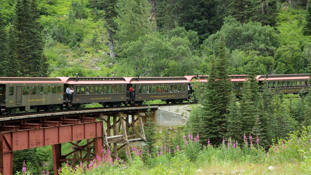 Skagway featuring railway items and forest scenes