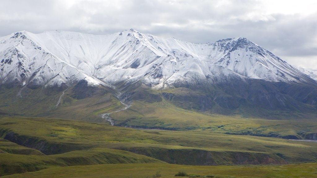 Denali National Park which includes snow and mountains