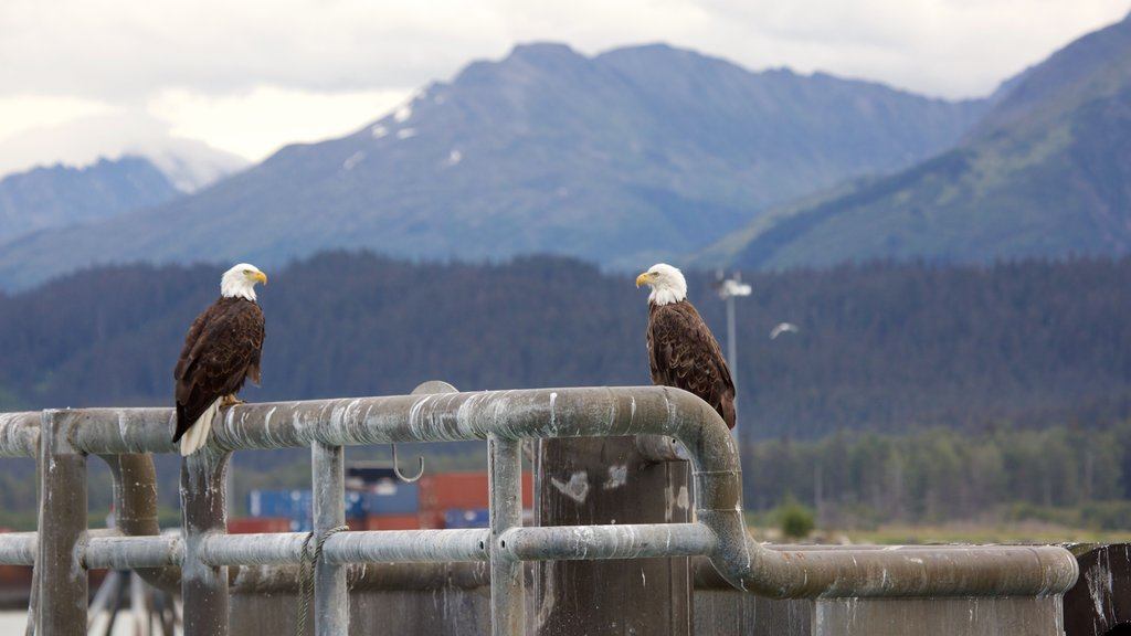 Seward ofreciendo vida de las aves
