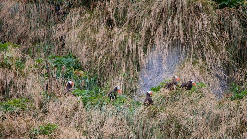Kenai Fjords National Park que incluye vida de las aves