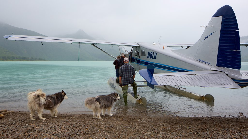 Lake Clark National Park and Preserve featuring cuddly or friendly animals and a pebble beach
