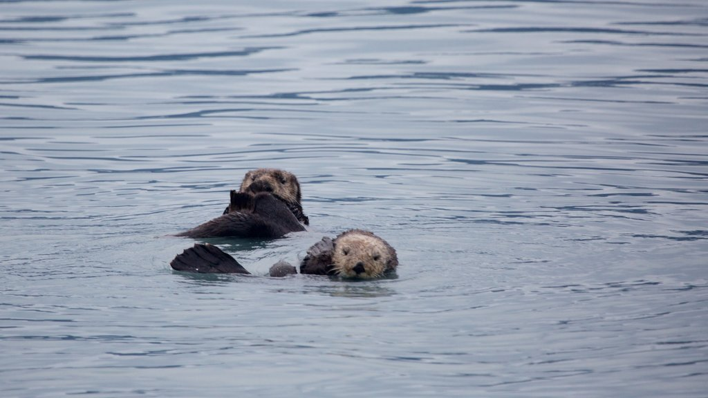 Kenai Fjords National Park ofreciendo un río o arroyo, animales tiernos y vida marina