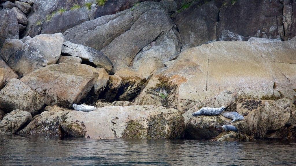 Kenai Fjords National Park mostrando costa escarpada