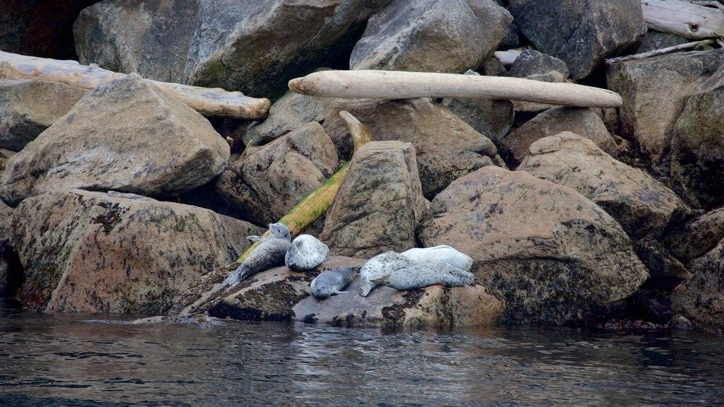 Kenai Fjords National Park que incluye animales peligrosos y costa rocosa