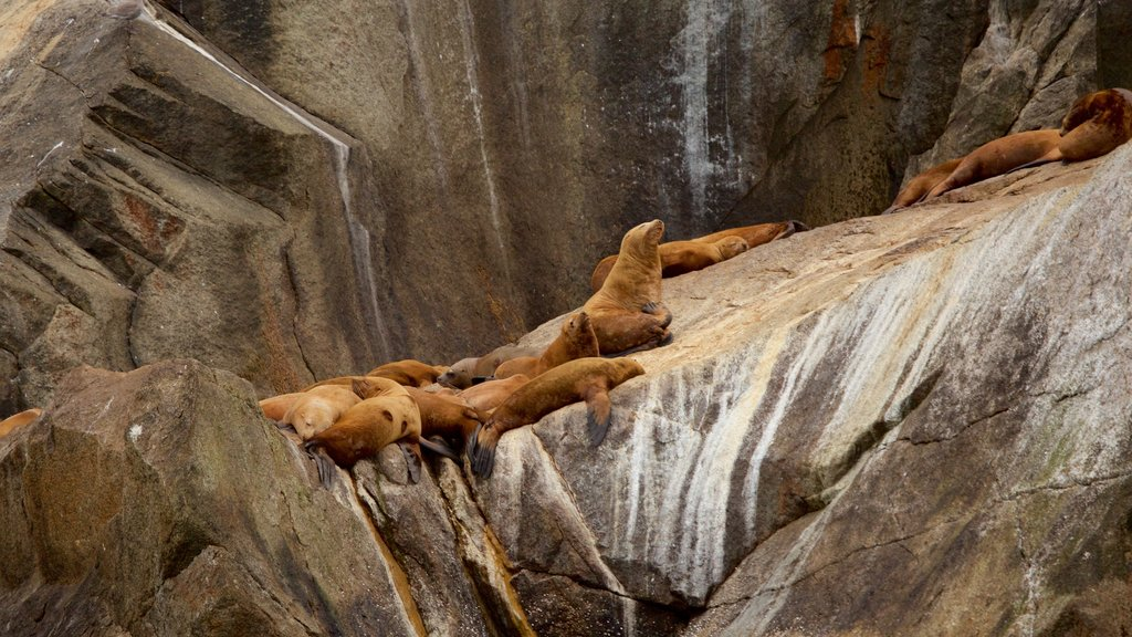 Kenai Fjords National Park que incluye animales peligrosos