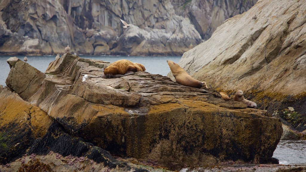Kenai Fjords National Park showing dangerous animals