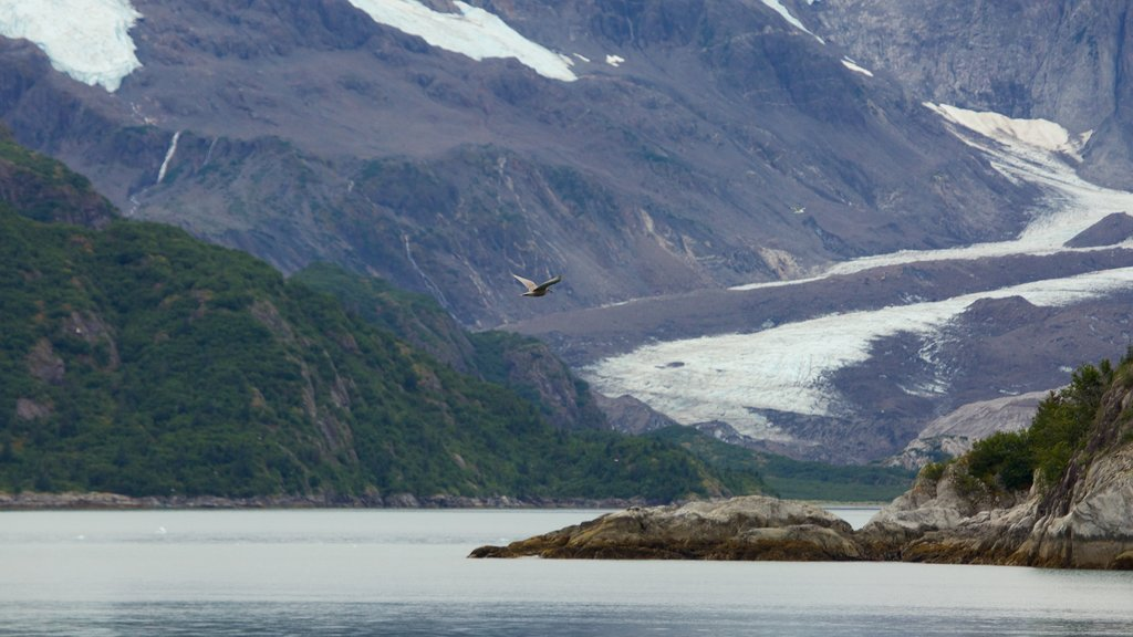 Kenai Fjords National Park featuring bird life