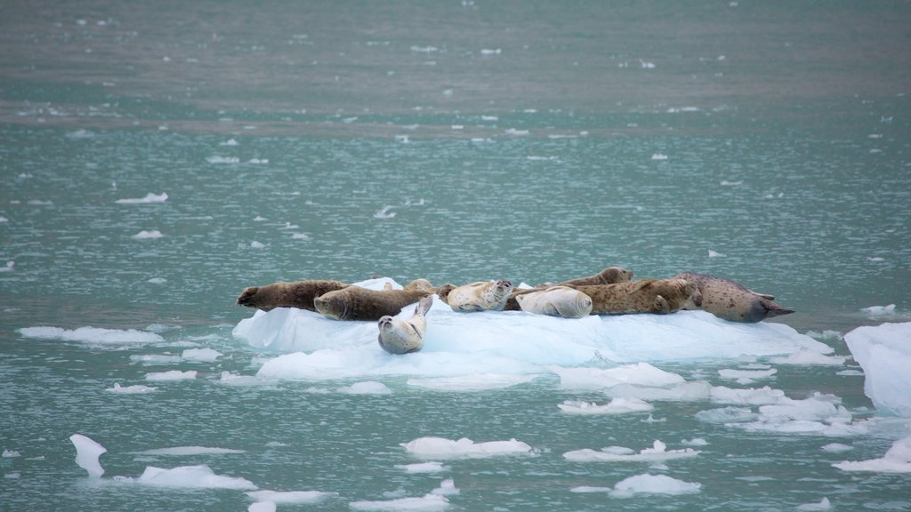 Kenai Fjords National Park which includes general coastal views and dangerous animals
