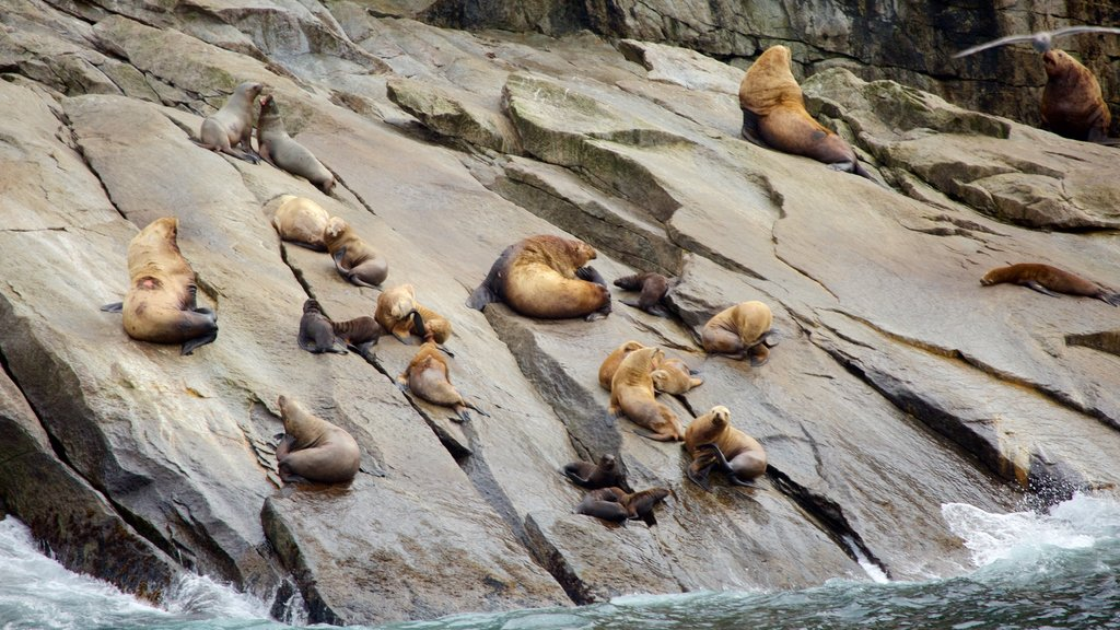 Kenai Fjords National Park featuring dangerous animals and rugged coastline