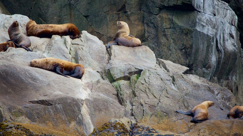 Kenai Fjords National Park featuring dangerous animals