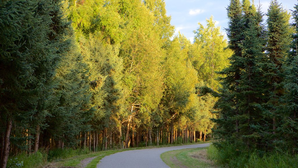 Tony Knowles Coastal Trail featuring forest scenes and a sunset