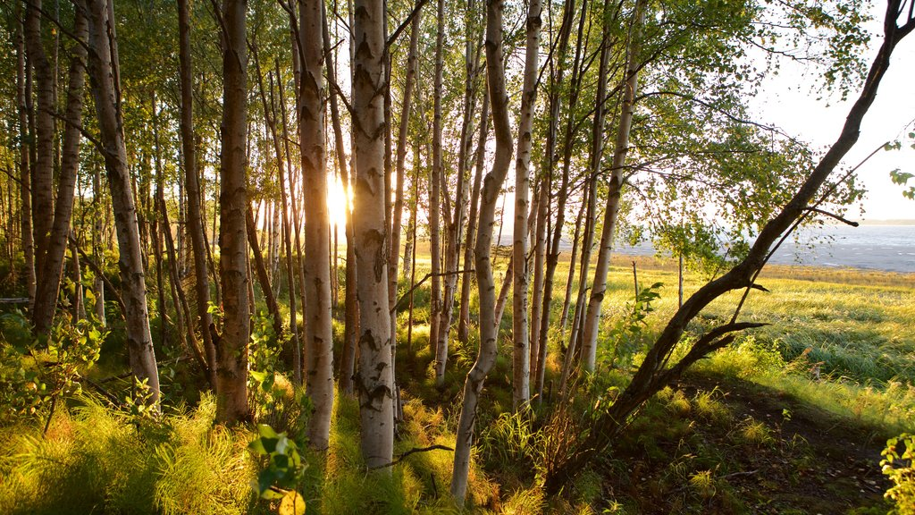 Tony Knowles Coastal Trail which includes forest scenes and a sunset