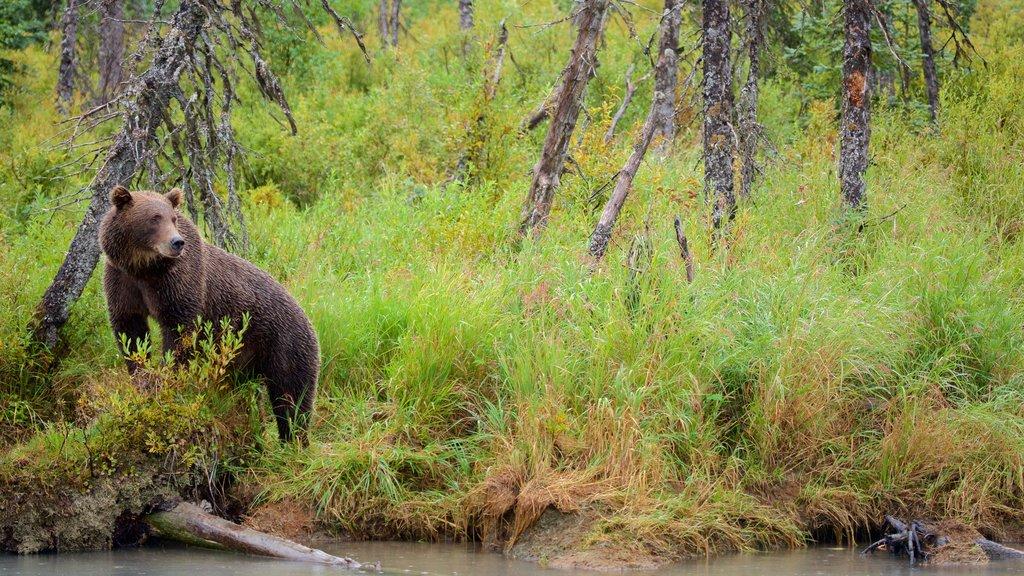 Parque Nacional y Reserva del Lago Clark ofreciendo animales peligrosos y animales terrestres