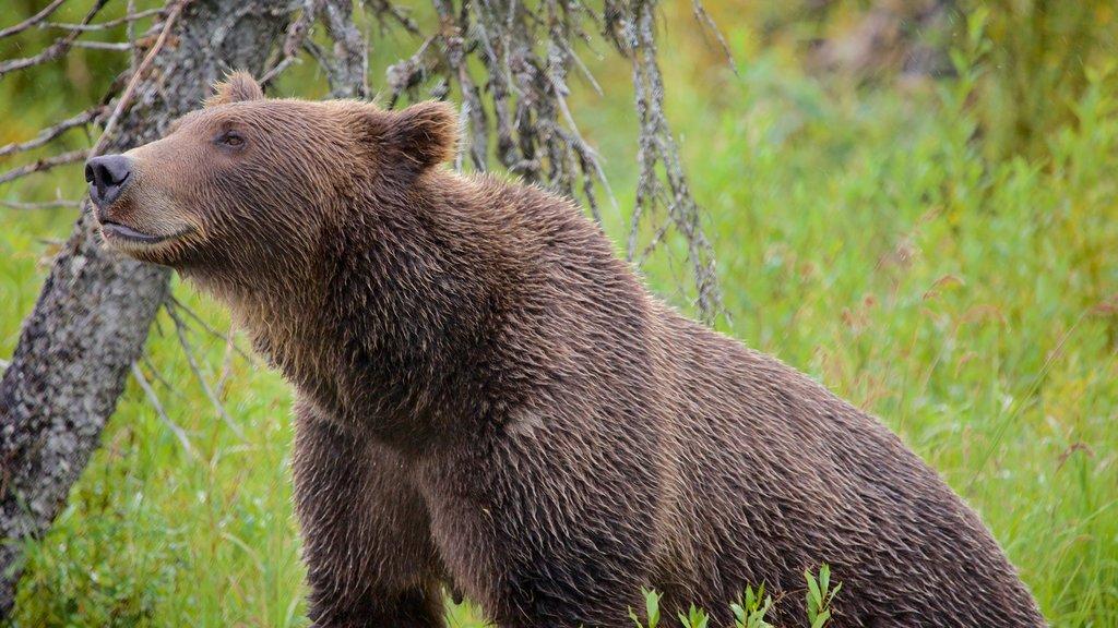 Parque Nacional y Reserva del Lago Clark ofreciendo animales terrestres y animales peligrosos