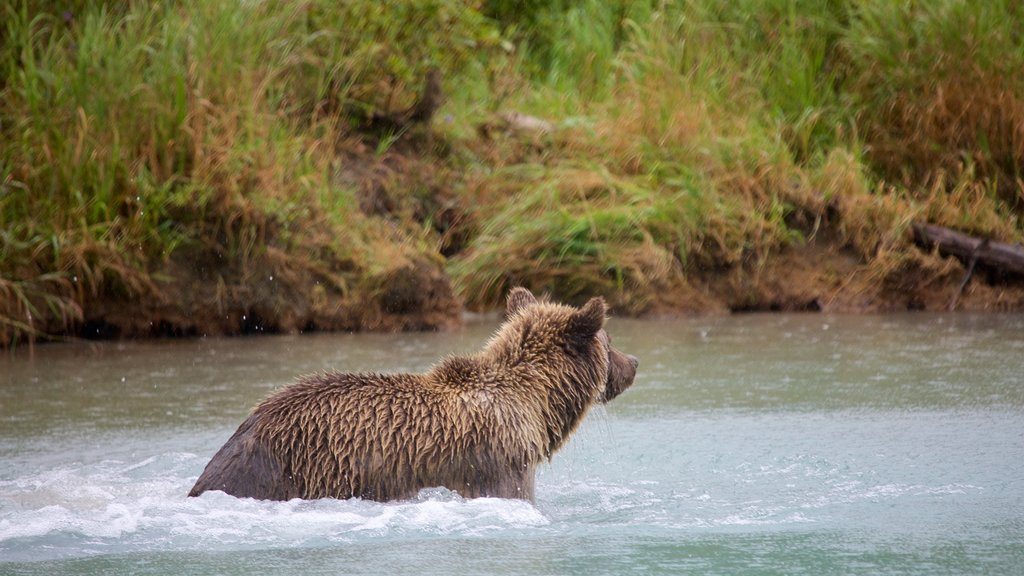 Lake Clark National Park and Preserve which includes land animals and dangerous animals