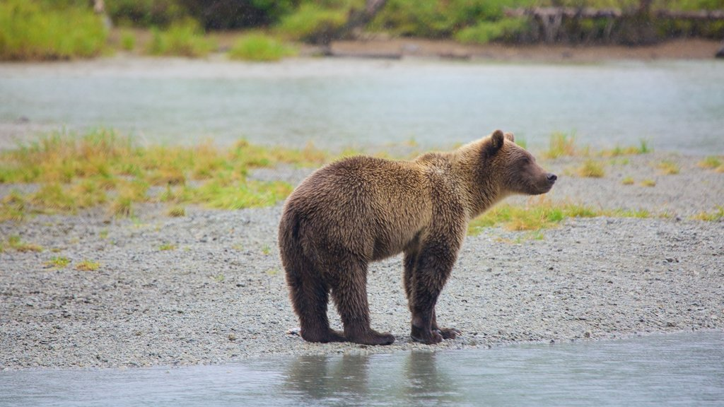Lake Clark National Park and Preserve showing dangerous animals and land animals