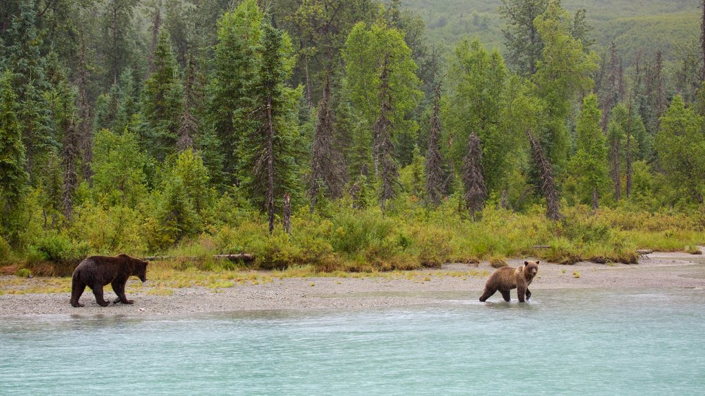 Lake Clark National Park and Preserve featuring dangerous animals, forests and land animals