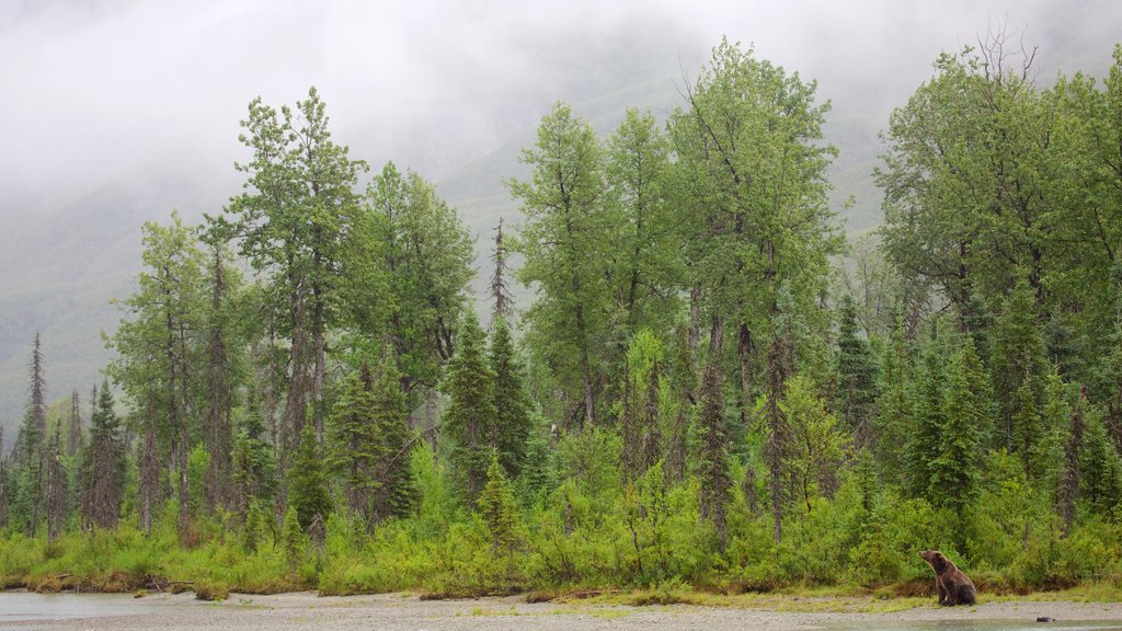 Lake Clark National Park and Preserve which includes dangerous animals, forests and land animals