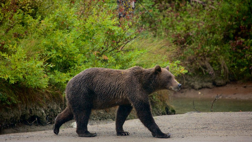 Lake Clark National Park and Preserve which includes dangerous animals and land animals