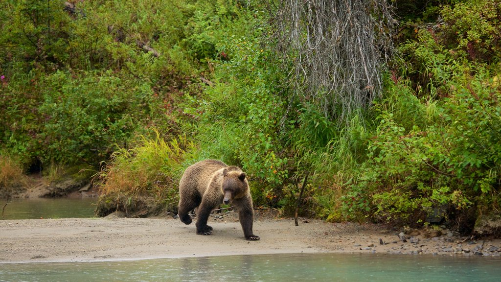 Lake Clark National Park and Preserve featuring land animals and dangerous animals