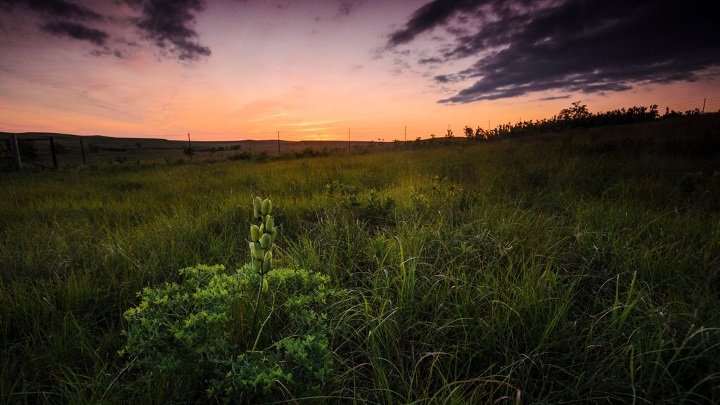 Kansas featuring a sunset and farmland