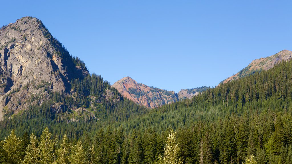Snoqualmie Pass which includes forest scenes and mountains