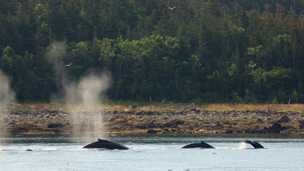 Juneau ofreciendo un lago o abrevadero, escenas forestales y vida marina