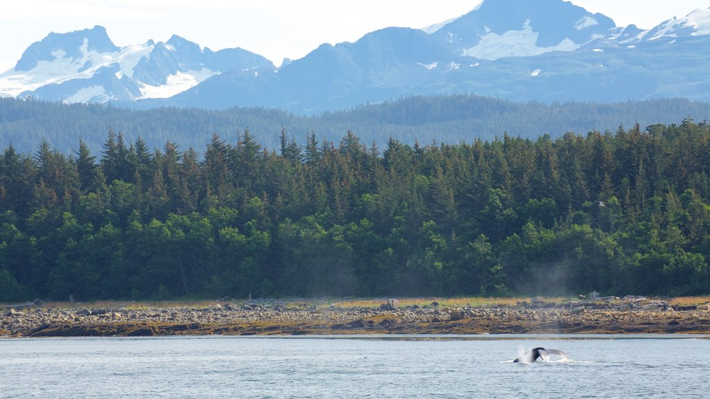 Juneau which includes a lake or waterhole, forests and marine life