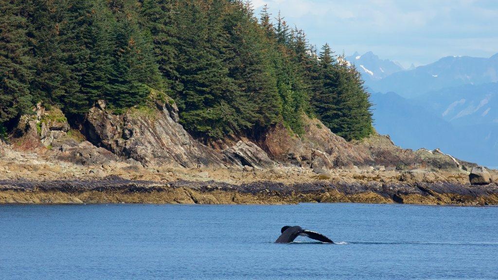 Juneau ofreciendo vida marina, un lago o abrevadero y escenas forestales