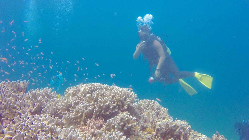 Ishigaki featuring coral, marine life and scuba