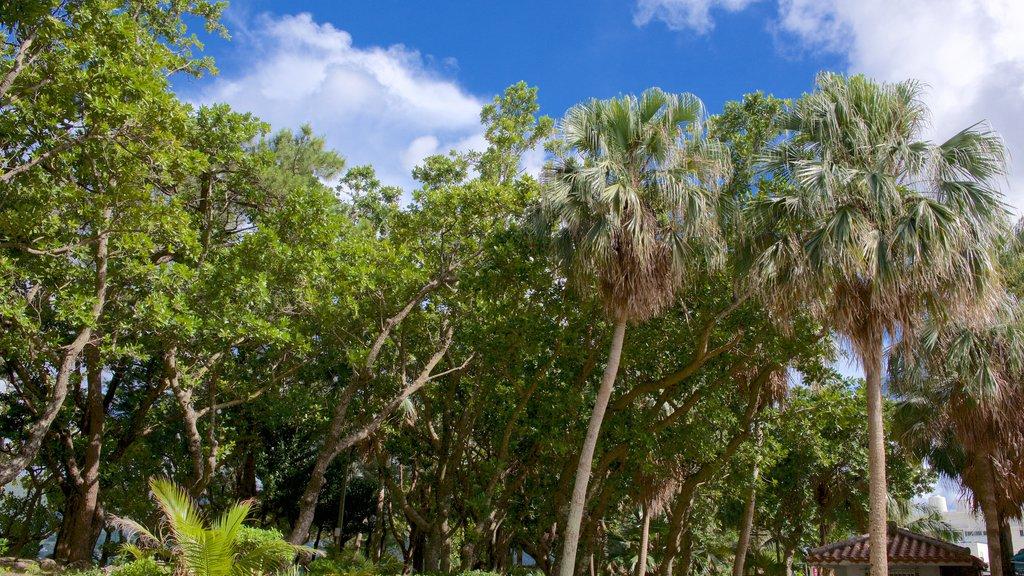 Kabira Park featuring a park