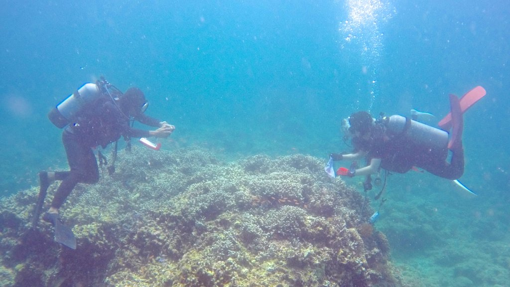 Ishigaki showing diving and coral