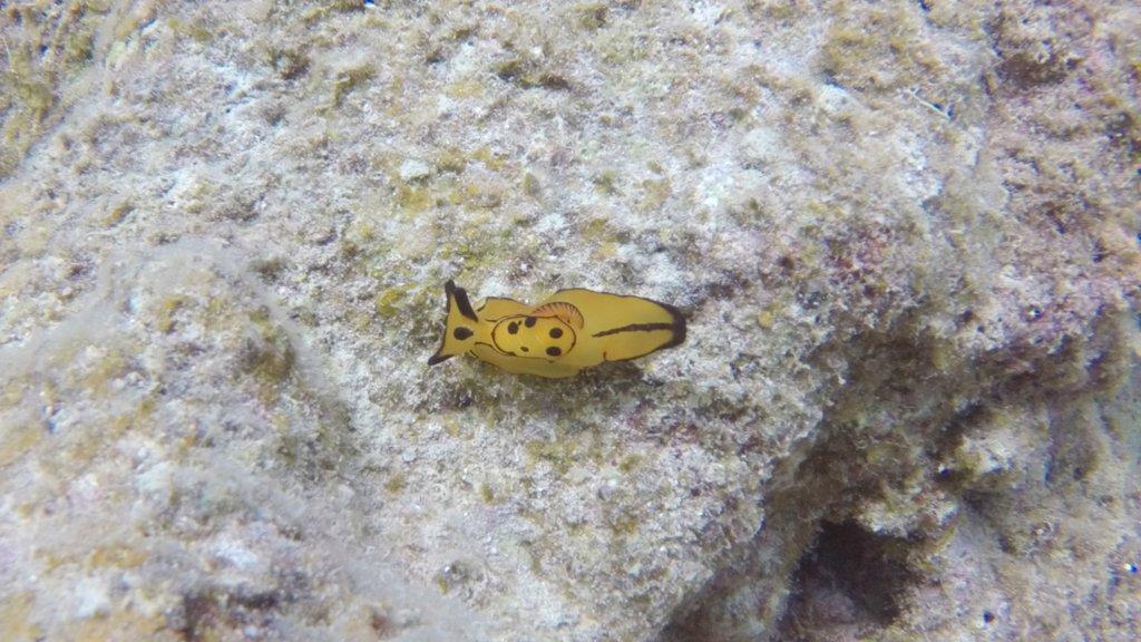 Ishigaki featuring colorful reefs and marine life
