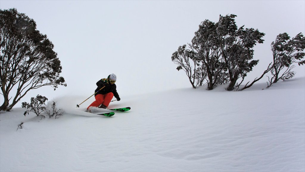 Hotham Heights showing snow skiing and snow