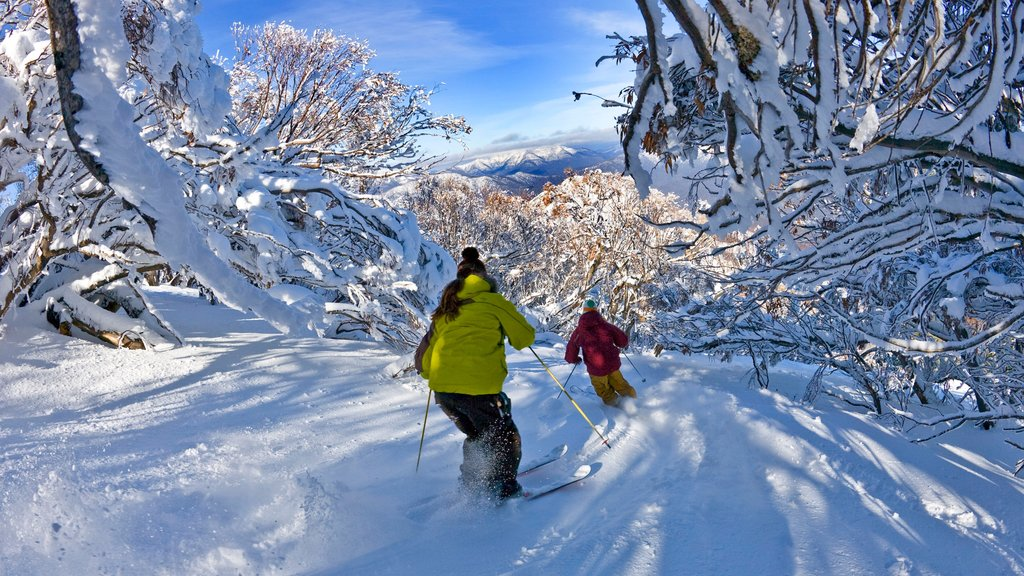 Mt. Buller Ski Slopes featuring forest scenes, snow skiing and snow
